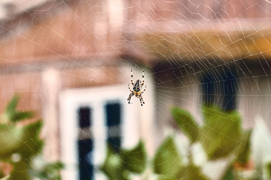 Spider in his cobweb on an old house background