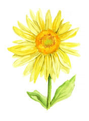 Isolated watercolor sunflower on white background. Beautiful flower. Symbol of summer and sun.