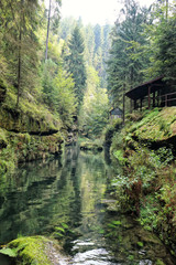 Hut creek and forest in the Bohemian Swizterland