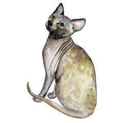 Watercolor close up portrait of popular hairless Canadian Sphynx cat breed isolated on white background. Sweet cat with no fur coat. Hand drawn pet. greeting card design. Graphic clip art illustration