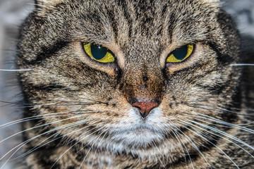 Close-up portrait of a striped cat