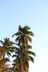 palmier au coucher de soleil