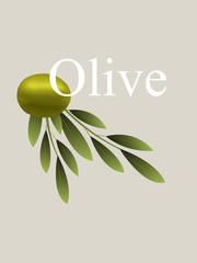 Vector Olive Branch Illustration