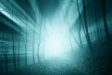 Wall Mural - Magical blue color sun rays in the foggy forest landscape.
