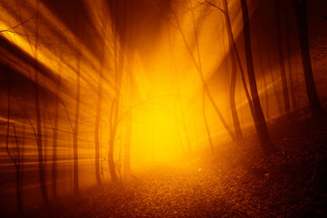 Wall Mural - Magical orange red color sun rays in the foggy forest landscape.