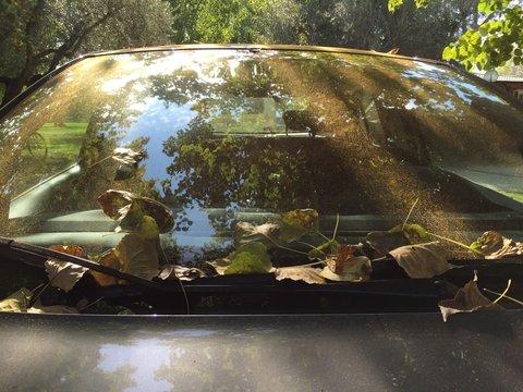 foglie e riflessi sul parabrezza