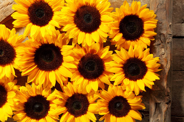 Rows of brown and yellow sunflower blooms