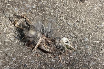 Carcasses of dead bird.