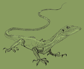 Lizard, hand painted drawing of outline isolated on white background