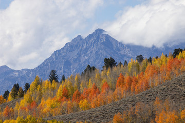 The trees display their fall beauty with the Teton Range in the background