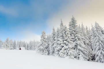 Snowy winter in mountains