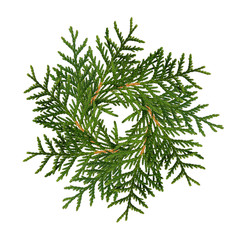 Christmas wreath from thuja twigs