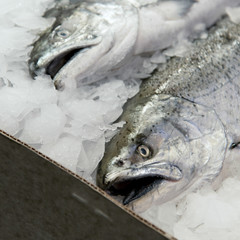 Fish on ice for sale at Pike Place Market, Seattle, Washington S