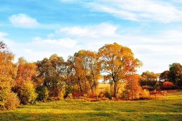 Sunset autumn outdoor view of autumn park in nice weather. Autumn nature landscape-autumn park in autumn sunlight