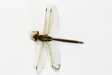 Dragon fly isolated over a white background
