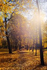 Garden Poster autumn sun in the park