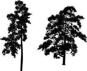 two black large pine silhouettes on white