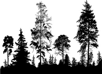 pine black forest silhouettes isolated on white