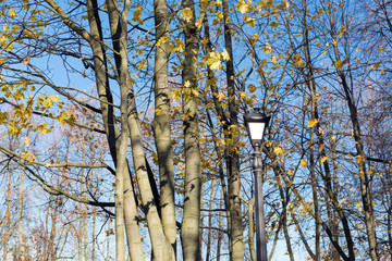 bare maple trees with yellow few leaves and lantern in autumn park