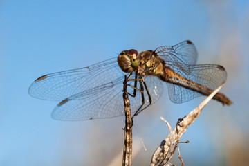 Close-up of a dragon fly
