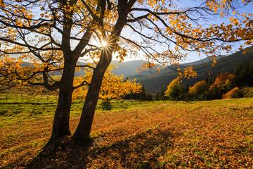 Golden autumn landscape in the morning sun