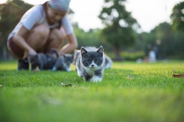 Woman and gray kitten