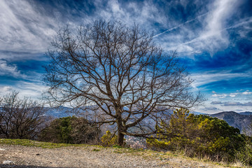 Isolated bare tree near a mountain path under a blue cloudy sky