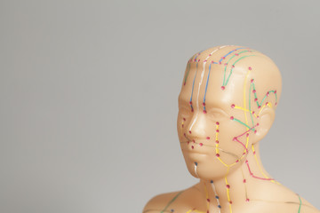 Medical acupuncture model of human head isolated on gray backgro