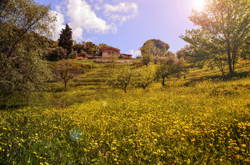 Green Toscana