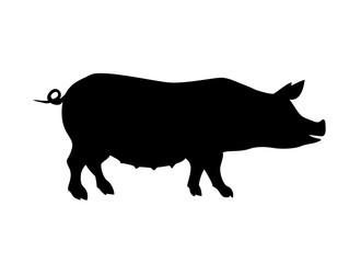 Pig silhouette. Farm animal.