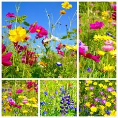 Wildblumen Collage - Grußkarte - Sommerblumen
