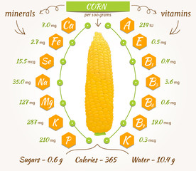 Corn infographics, nutrition facts, calories and analysis. Vector illustration. The content of minerals and vitamins in sweetcorn. Vector illustration.