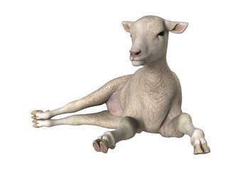 3D Rendering White Lamb on White