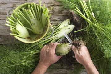 Preparation of fennel