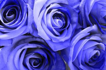 Fototapete - Blue rose bouquet