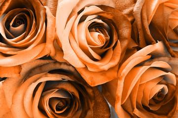 Fototapete - Orange rose bouquet