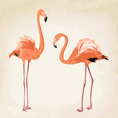 Pair of beautiful pink flamingo birds on vintage background. Fully editable vector drawing.