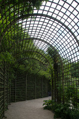 Wooden pergola like a tunnel with trees on a side. Park in Versalles, France.