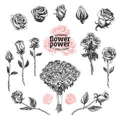 Roses vector set. Flower illustrations in sketch style.