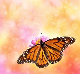 Female Monarch butterfly on beautiful dreamy bokeh background