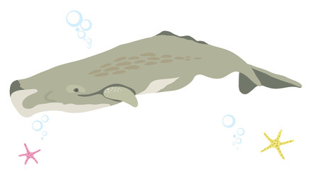 Sperm whale icon isolated on white background cartoon realistic whale