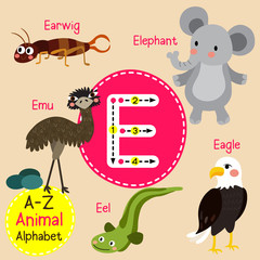 E letter tracing. Eagle. Earwig. Eel. Elephant. Emu. Cute children zoo alphabet flash card. Funny cartoon animal. Kids abc education. Learning English vocabulary. Vector illustration.