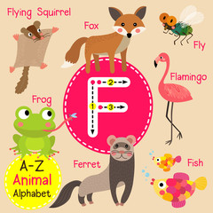 F letter tracing. Ferret. Fish. Flamingo. Fly.  Fox. Frog. Cute children zoo alphabet flash card. Funny cartoon animal. Kids abc education. Learning English vocabulary. Vector illustration.