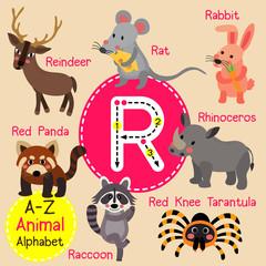 R letter tracing. Rabbit. Raccoon. Rat. Reindeer. Rhinoceros. Cute children zoo alphabet flash card. Funny cartoon animal. Kids abc education. Learning English vocabulary. Vector illustration.