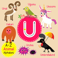 U letter tracing. Unicorn. Umbrellabird. Urchin. Uguisu.  Cute children zoo alphabet flash card. Funny cartoon animal. Kids abc education. Learning English vocabulary. Vector illustration.