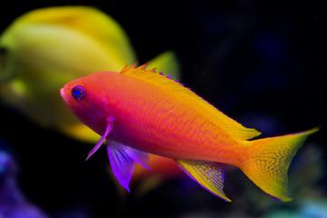Fish & Undersea Life