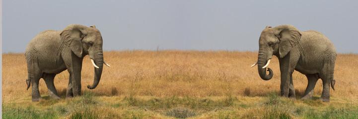 Elephants d'afrique en Tanzanie, Serengeti