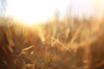 cute autumn background blur dry grass and twigs sunlight