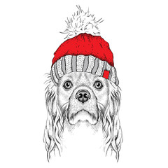 Door stickers Hand drawn Sketch of animals The christmas poster with the image dog portrait in winter hat. Vector illustration.