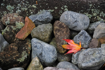Red maple leafe on river stones and mossy background